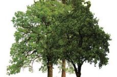 23 de novembro – Dia da Floresta Autóctone.