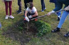 Fomos plantar árvores!